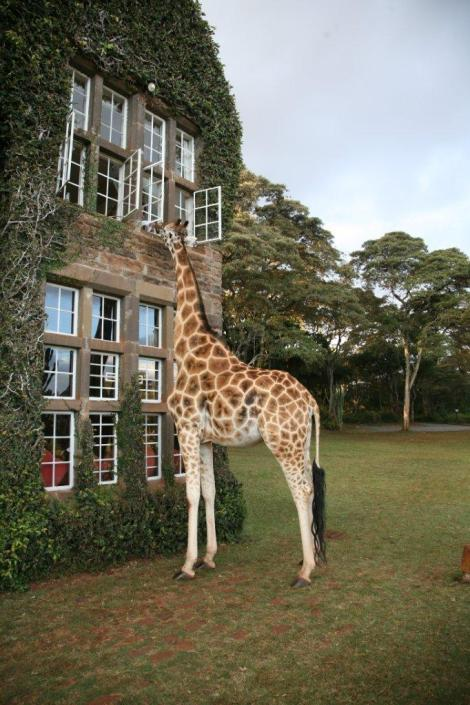 This post is ultimately about the Giraffe Manor in Kenya. But first, a backstory.